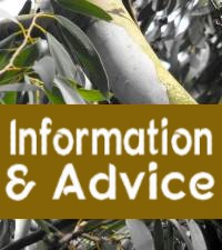 Information & Advice